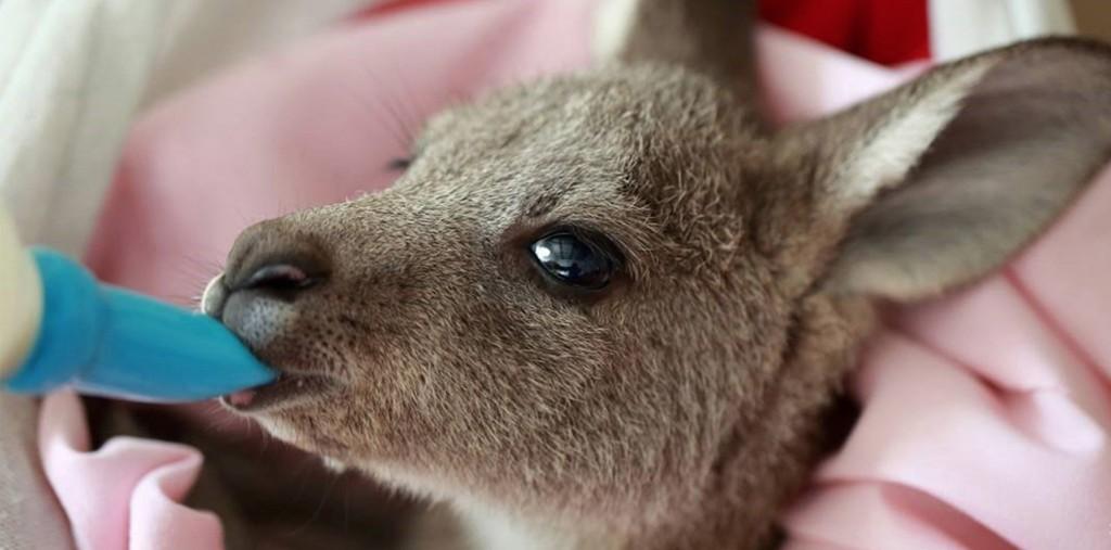 kangaroo blog wires australia