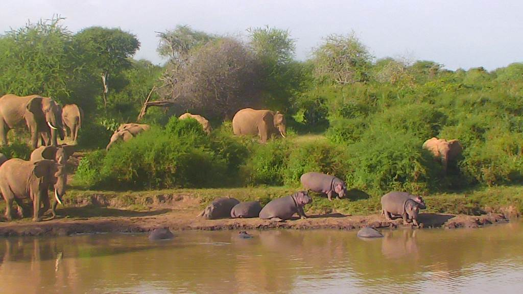 ellies and hippos