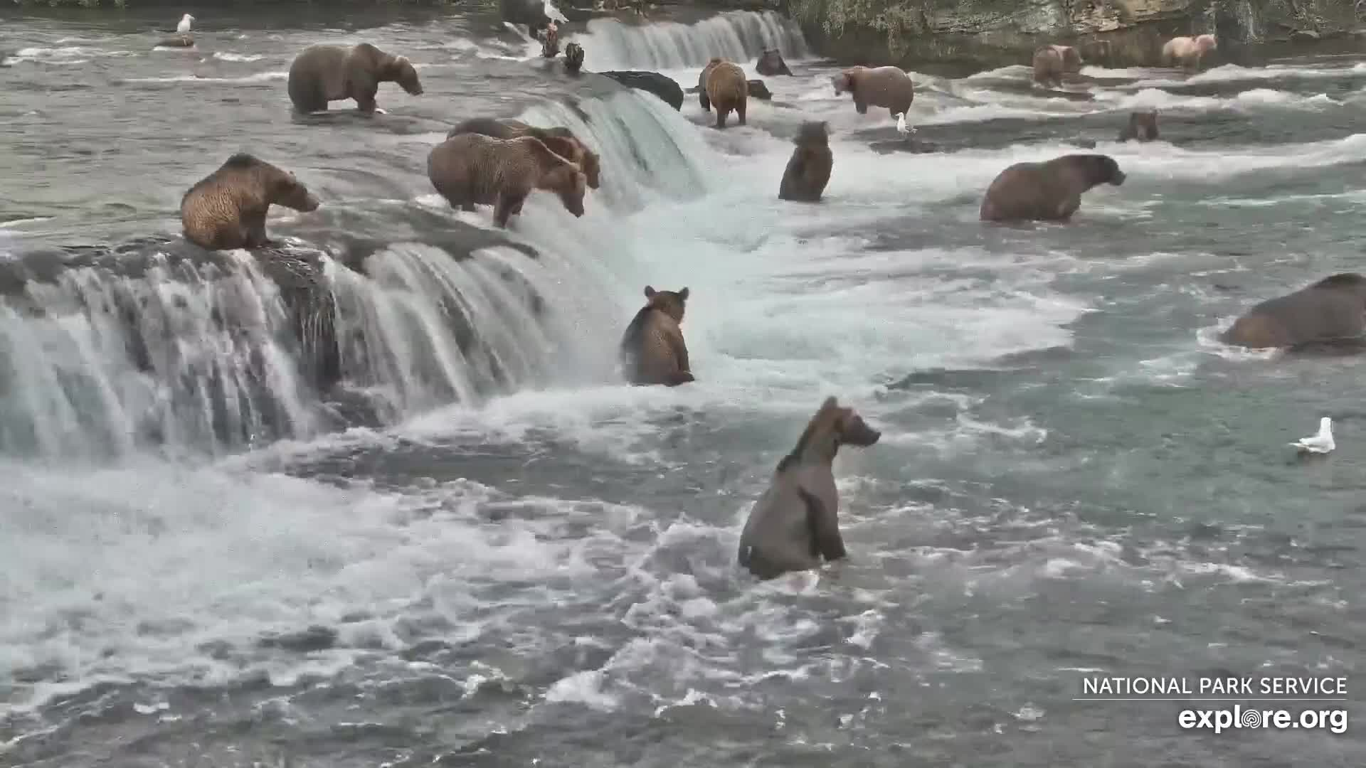 Mother Bears and Human Emotion